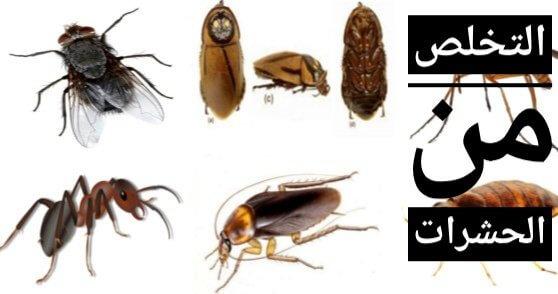 نصائح للتخلص من حشرات المنزل