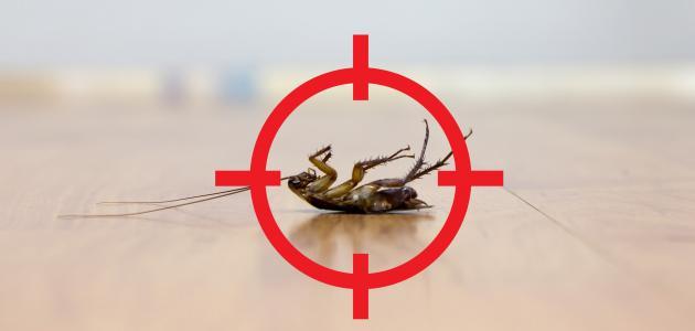 نصائح مكافحة الصراصير نهائيا